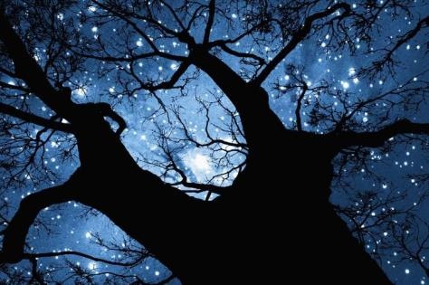 Trees-Night-Stars--485x728